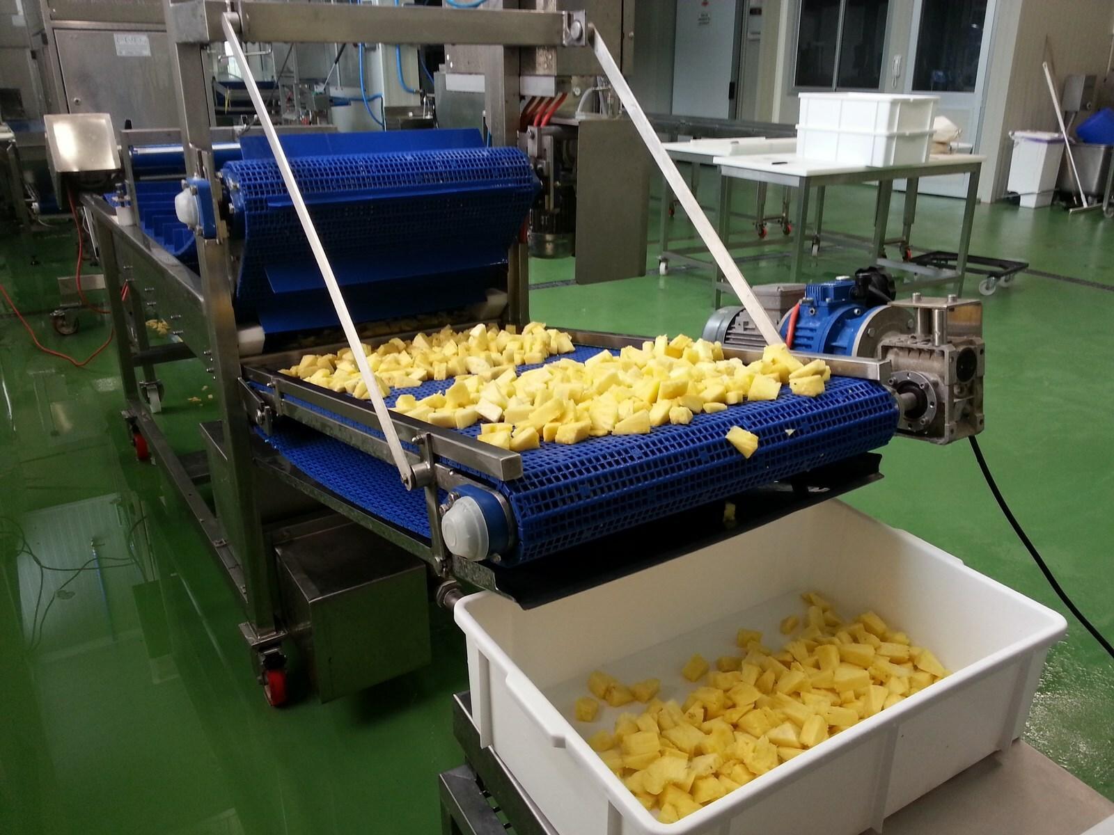 pineapple_melon_processing line (2)
